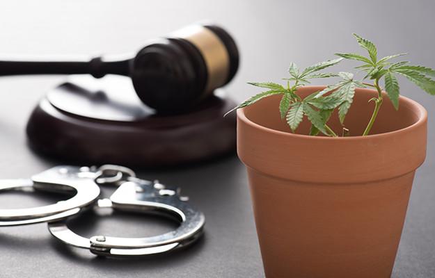【弁護士特集】24時間受付可|大麻事件の無料相談はネットで